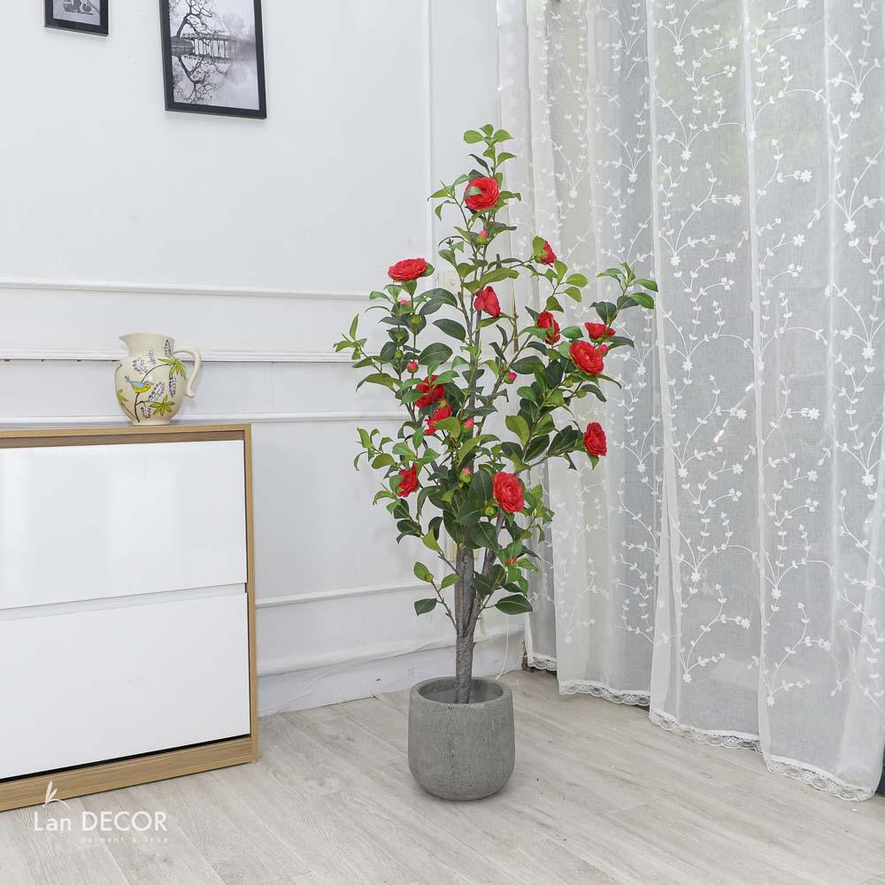 Cây trà đỏ cao 140cm - LC3011