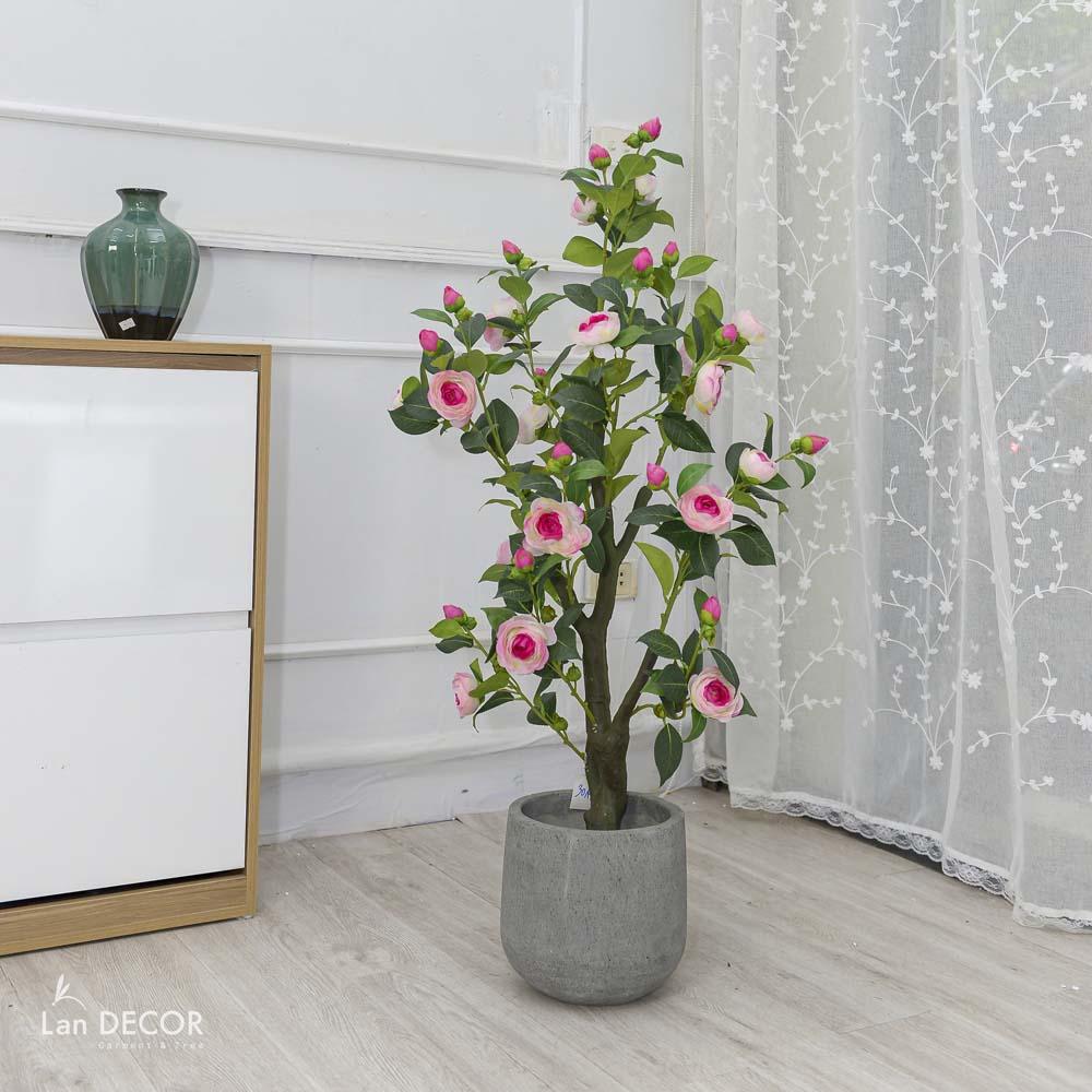 Cây trà hồng cao 125cm - LC3014
