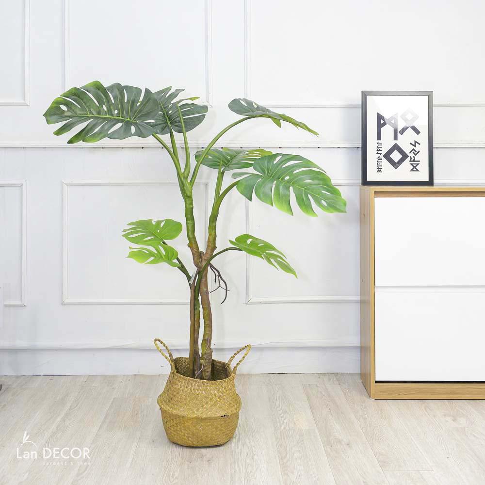 CÂY TRẦU BÀ NAM MỸ (150cm) - LC3028