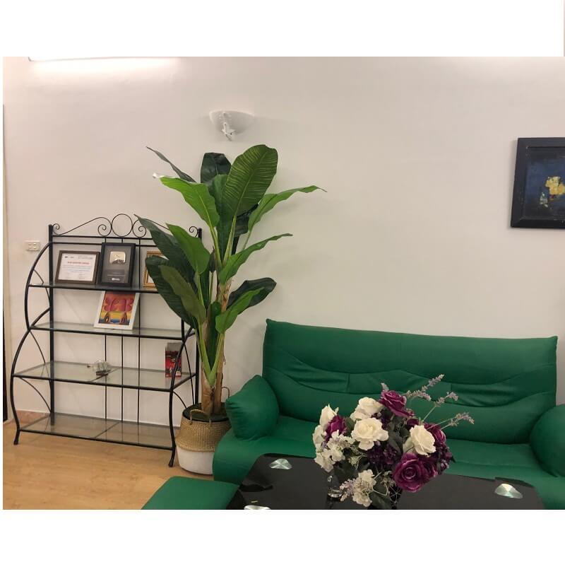 Ảnh khách hàng chụp feelback cây chuối