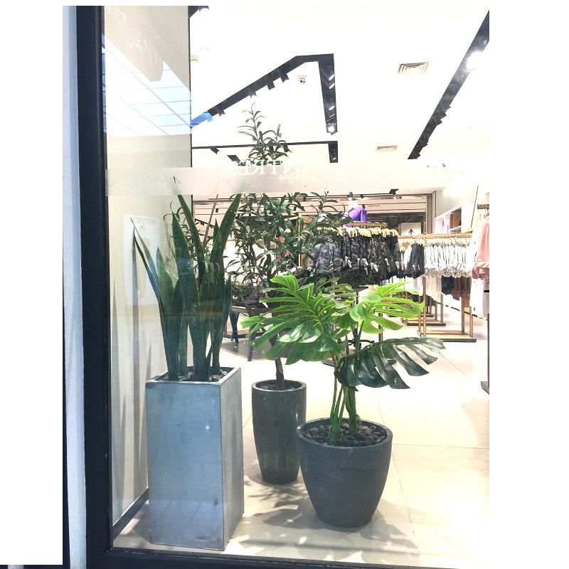 Chậu cây lá rùa trang trí shop thời trang cực đẹp