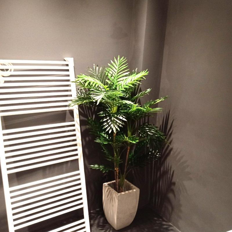 Cây dừa trang trí nhà cửa