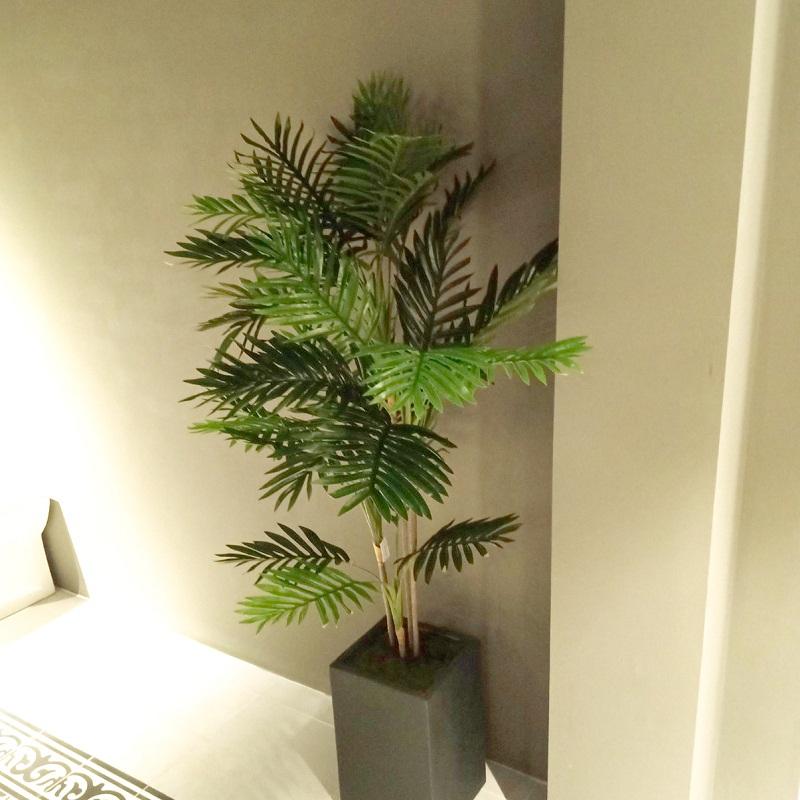 Cây dừa cảnh tại Showroom nội thất RICO