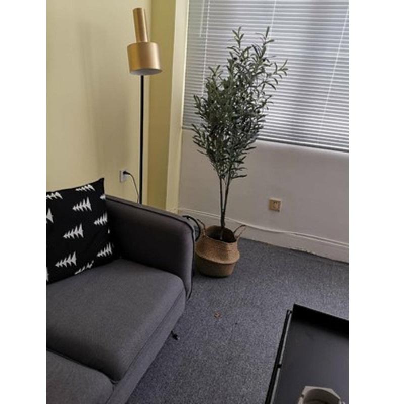 Cây oliu trang trí phòng khách phong cách hiện đại