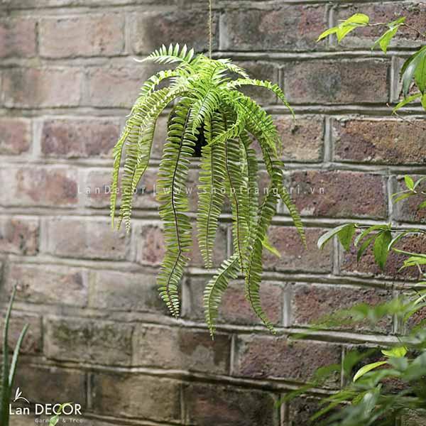 Giỏ cây dương xỉ trang trí không gian xanh Lan Decor - CC262