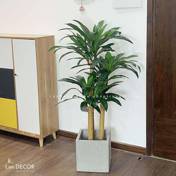 Cây thiết mộc lan cây cảnh trang trí nội thất Lan Decor (130cm) - LC2517