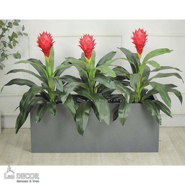 Bồn cây phát lộc hoa đẹp trang trí không gian xanh Lan Decor - BC037