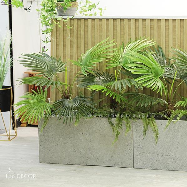 Bồn cây cọ tiểu cảnh trang trí nhà đẹp Lan Decor - BC046