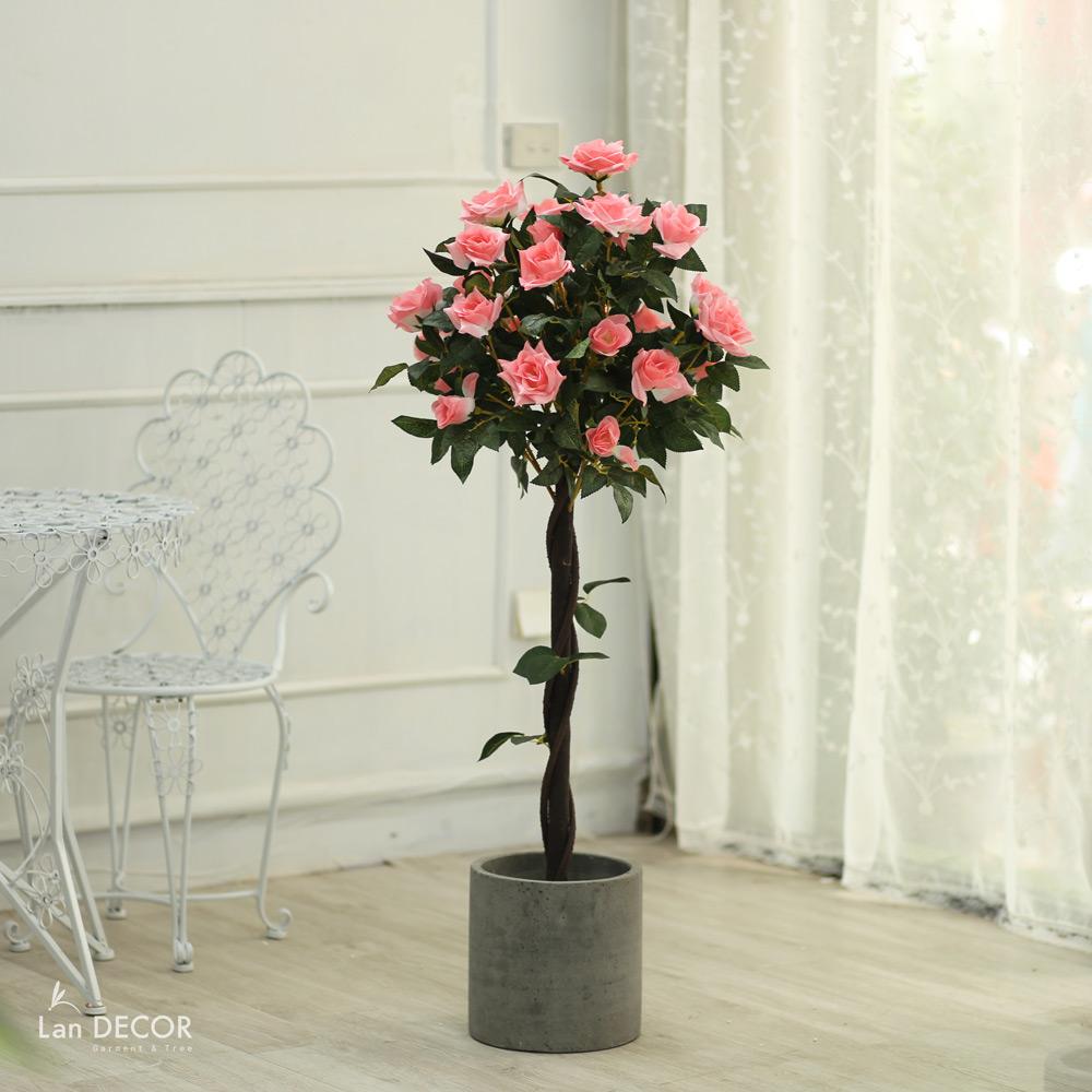 Cây hoa hồng cao 120cm - LC3003