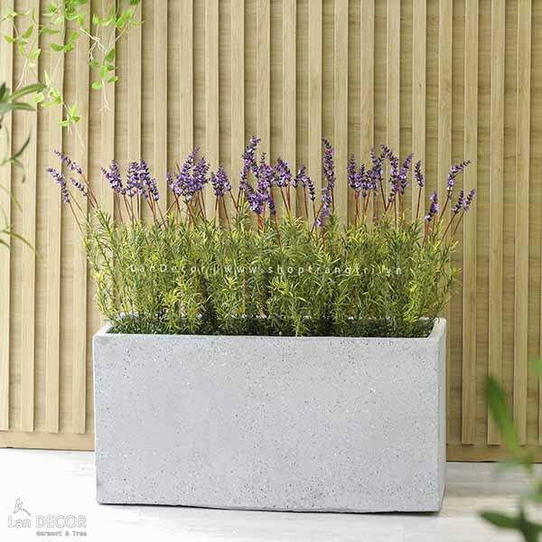 Bồn cây hoa Lavender trang trí đẹp, hiện đại Lan Decor - BC057