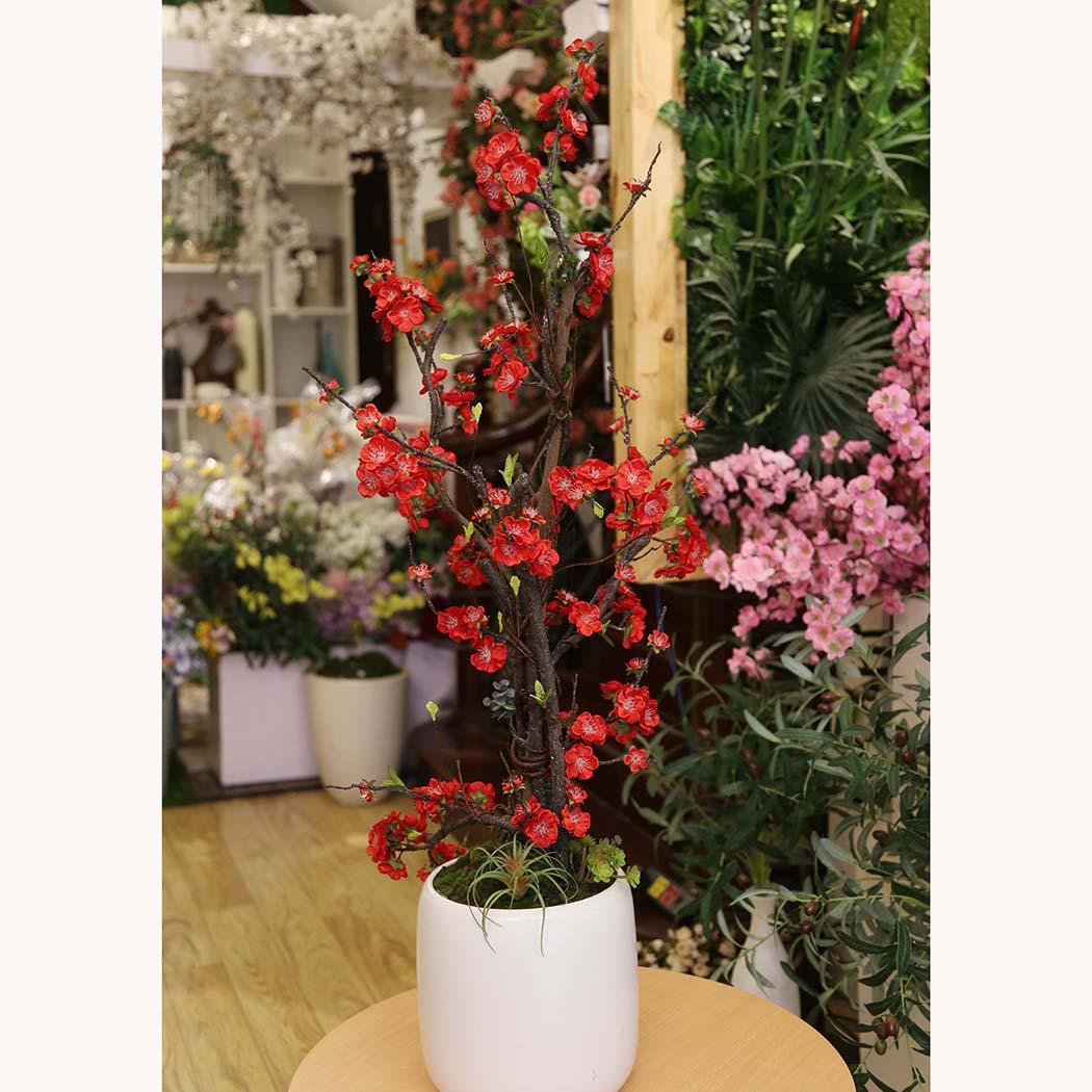 Chậu hoa đào - BH452