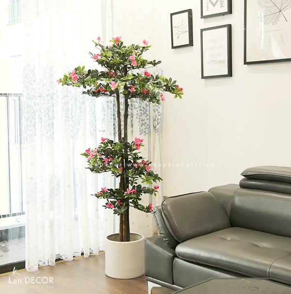 Cây hoa Đỗ Quyên 170cm - LC2450