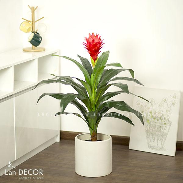 Cây phát lộc hoa 90cm - LC2431