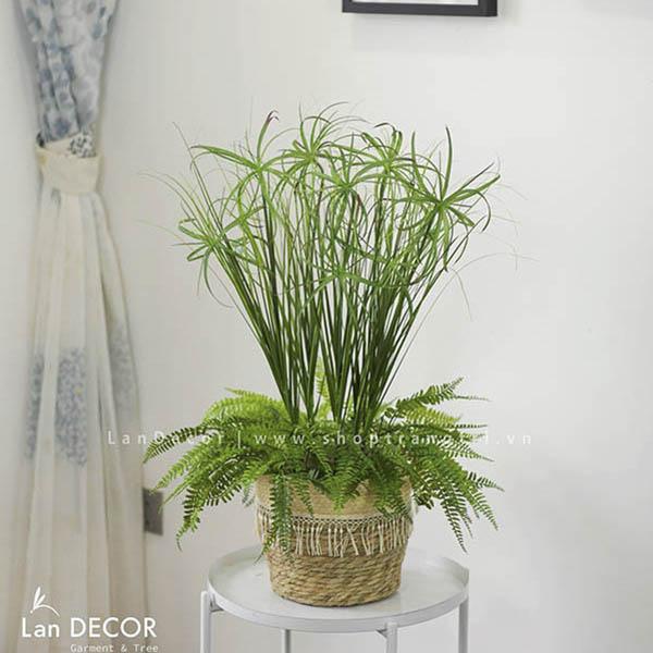 Cây cỏ sậy trang trí không gian hiện đại Lan Decor - CC209