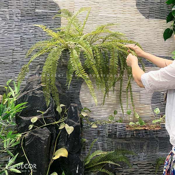 Cành dương xỉ cổ đại (65cm) - HC986