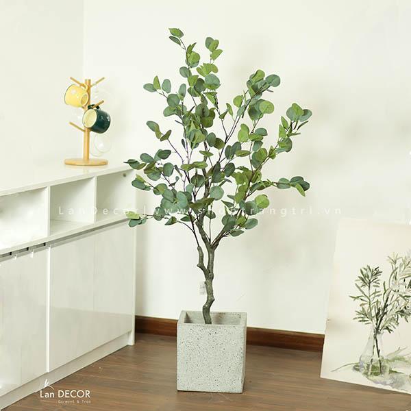 CÂY BẠCH ĐÀN GIẢ (130cm) - LC3050