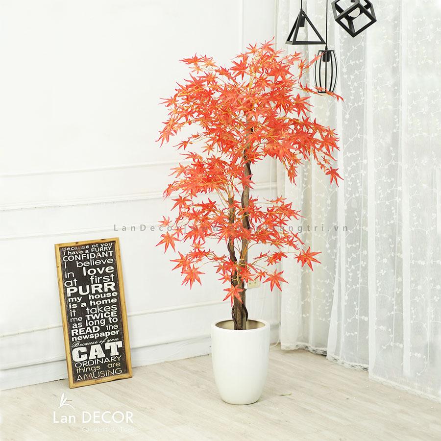 Cây phong lá đỏ trang trí nội thất đẹp 165cm- LC2787