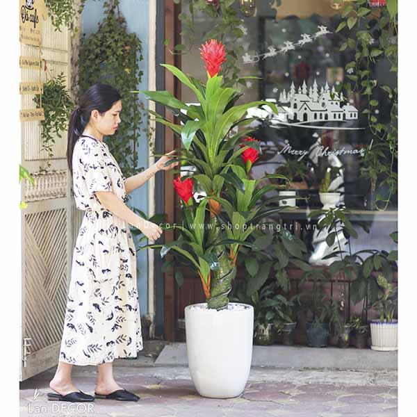 Cây phát lộc hoa trang trí nội thất Lan Decor 150cm - LC2593