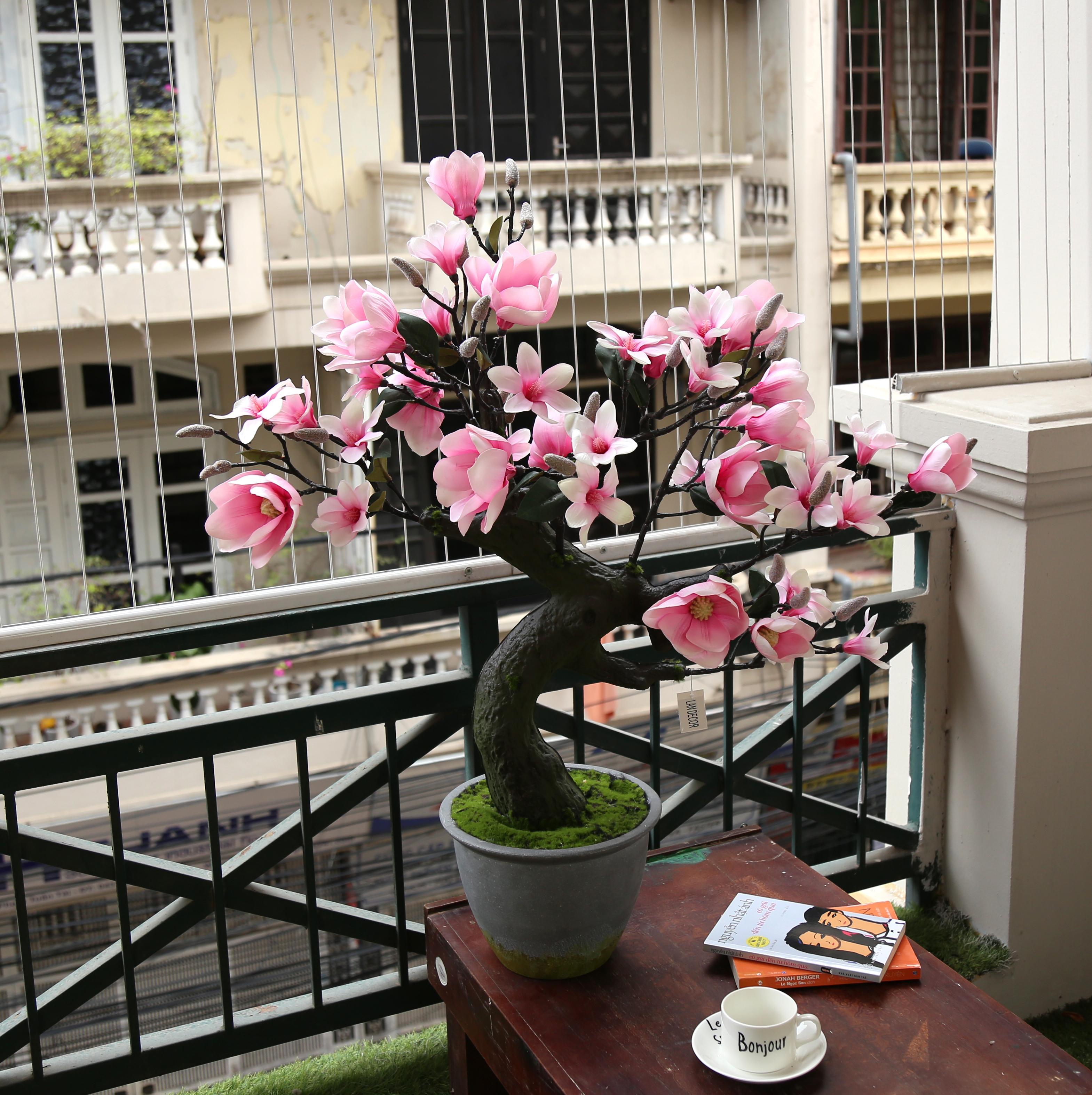 Cây mộc lan bonsai cao 85cm - LC3020
