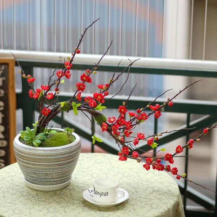 Chậu mai bonsai - BH774