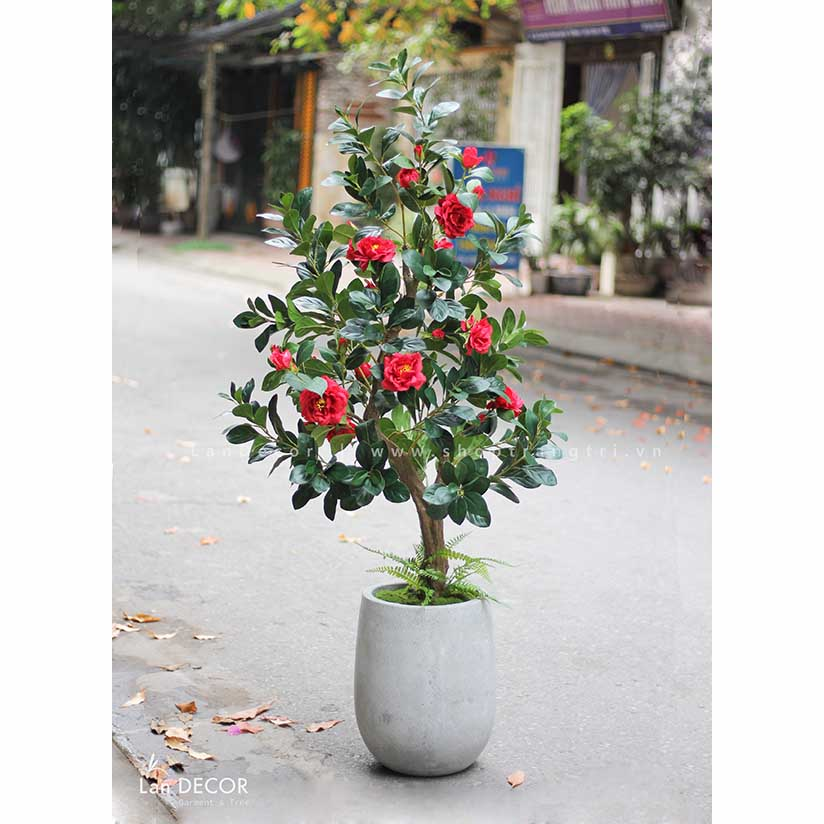 Chậu cây hoa trà đỏ trang trí (160cm) - CC248-2