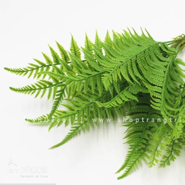 Bụi dương xỉ Ba Tư - HC1034