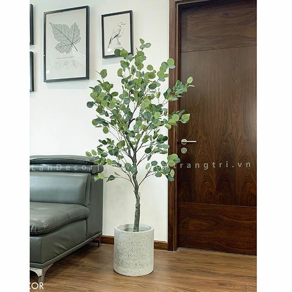 Cây bạch đàn trang trí nhà, quán cafe đẹp LanDecor (165cm) - LC3051