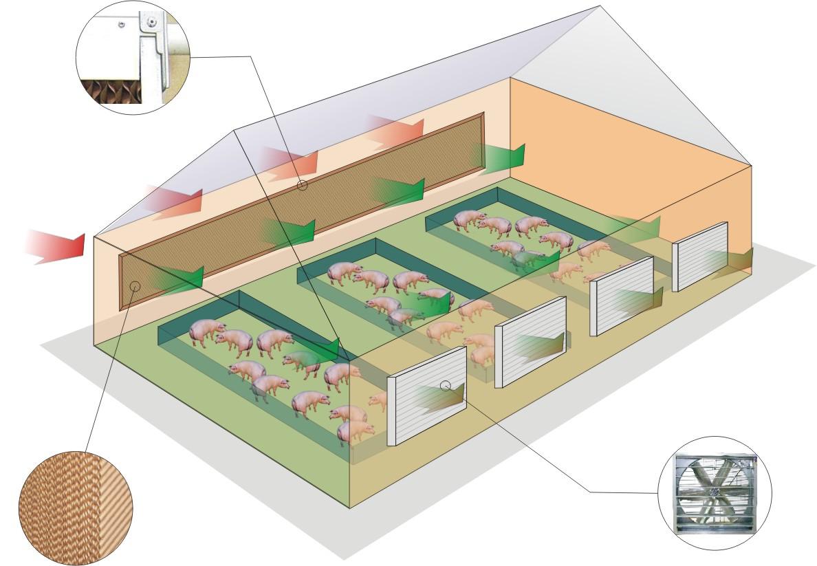 Hệ thống thông gió trang trại chăn nuôi