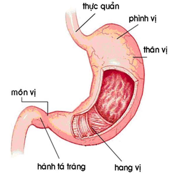 Đau dạ dày - Viêm dạ dày