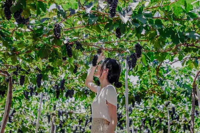Tập hợp trải nghiệm không hoang phí thể bỏ lỡ khi đi đến Ninh Thuận