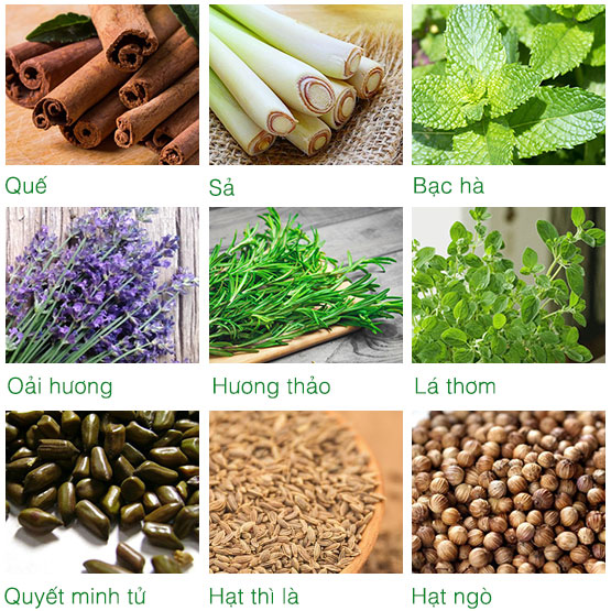 Thành phần bộ túi chườm cơ bản ATZ Organic