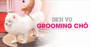 Dịch Vụ Grooming, Spa, Hotel