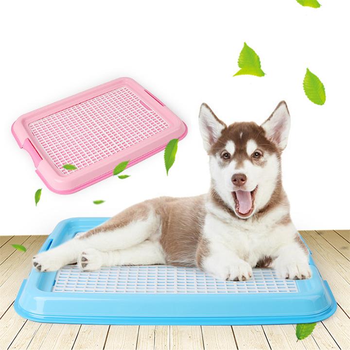 Đồ dùng dành cho chó vận dụng thiết yếu cho chó cưng