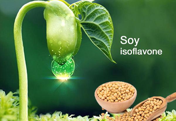 Tác dụng của Soy Isoflavone trong sản phẩm Ngọc Mỹ Đan