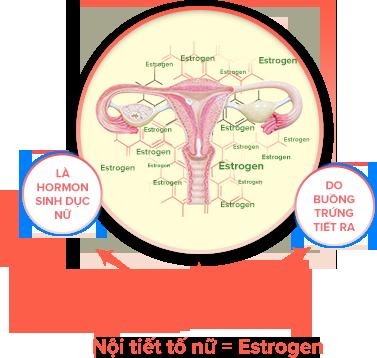 Nội tiết tố nữ là hormon sinh dục nữ được tiết ra chủ yếu ở buồng trứng