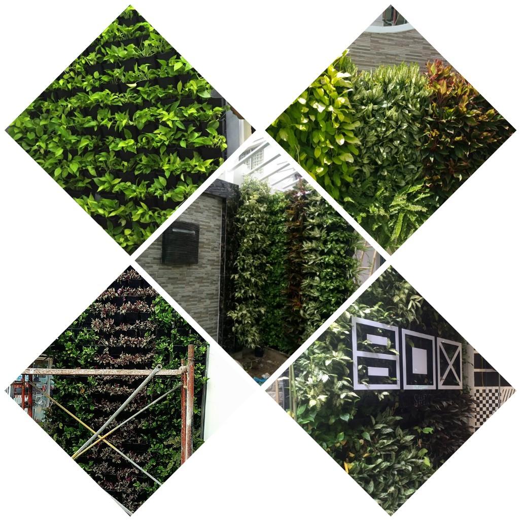 Hình ảnh tường cây đẹp
