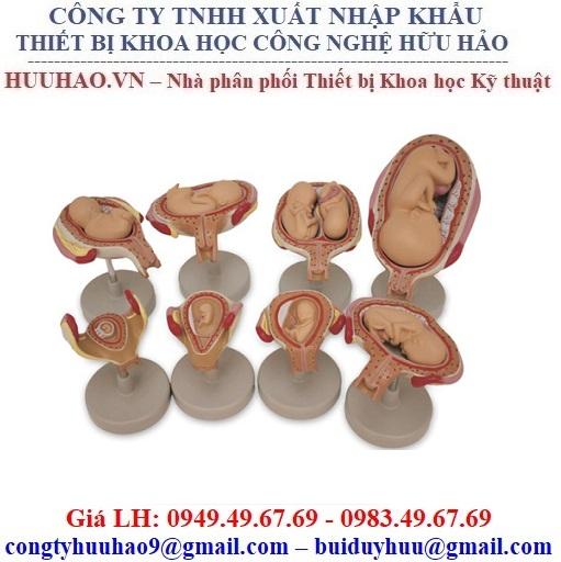 Mô hình phôi thai nhi Nasco SB47759U