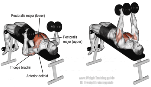 Decline Hammer Grip Dumbbell Bench Press