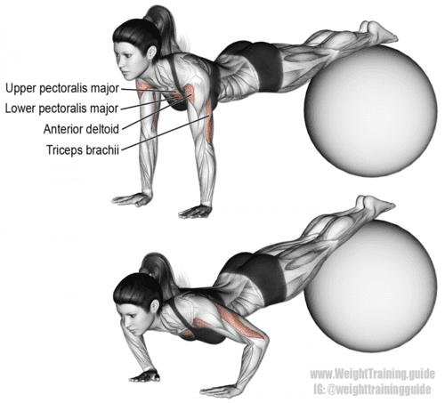 stability ball decline push up