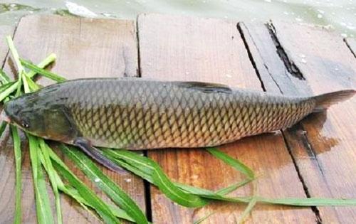 Diễn đàn rao vặt: Sức hút của Đặc sản Biển Quỳnh với việc phát triển du lịch Ca-chep-gion2