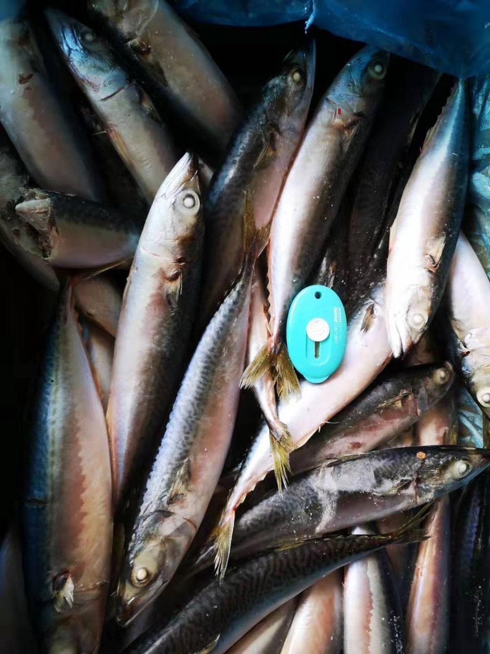 Diễn đàn rao vặt: Săn hải sản nhập khẩu Siêu ngon Siêu chất lượng Dadea32775c99297cbd8