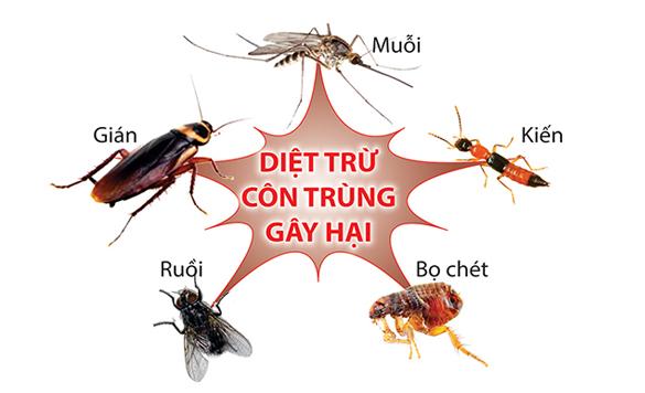 Diệt trừ côn trùng tại nhà