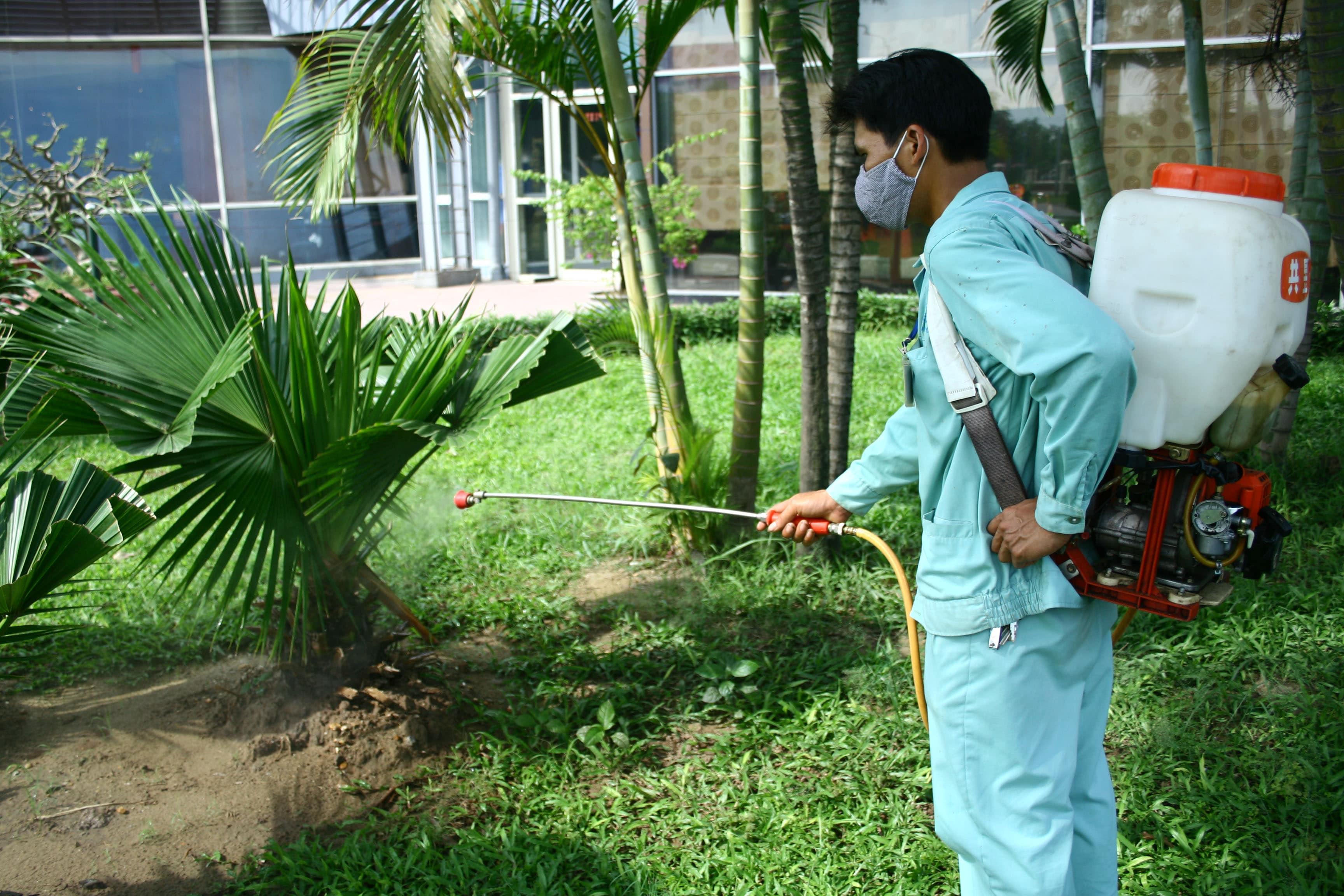 trồng cây phòng chống mối