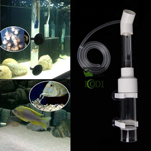 cichlids-fish-egg-incubator