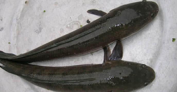 Hướng dẫn cách chọn lưỡi câu cá lóc cho cần thủ