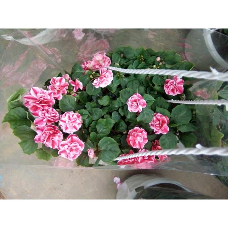 Hoa chậu 8