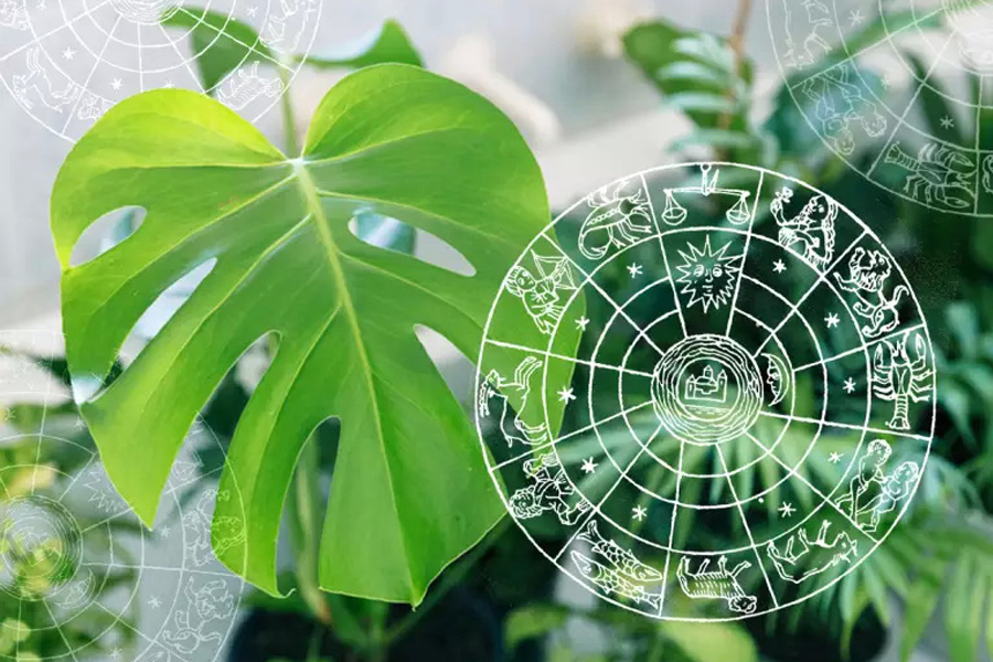THE HOUSE PLANT BASED ON YOUR ZODIAC SIGN