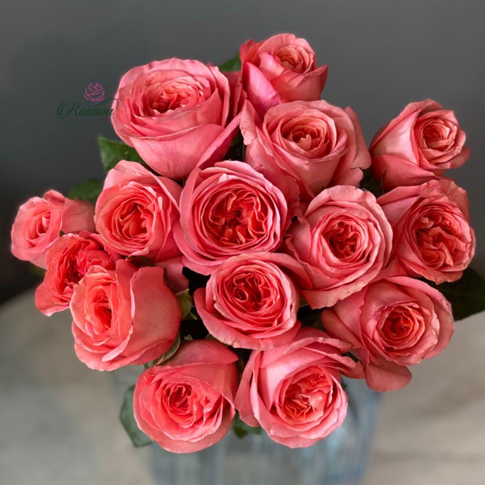 Hoa hồng London Eyes