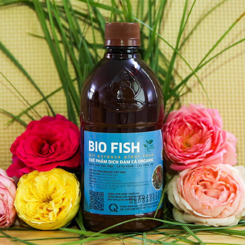 Dịch đạm cá Bio Fish – phân bón cho hoa hồng cao cấp