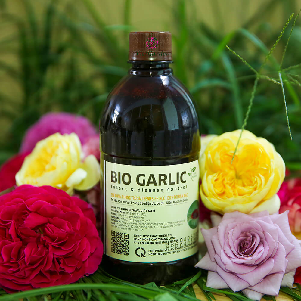 Chế phẩm phòng trừ sâu bệnh sinh học Bio Garlic từ tỏi an toàn và hiệu quả cho hoa hồng